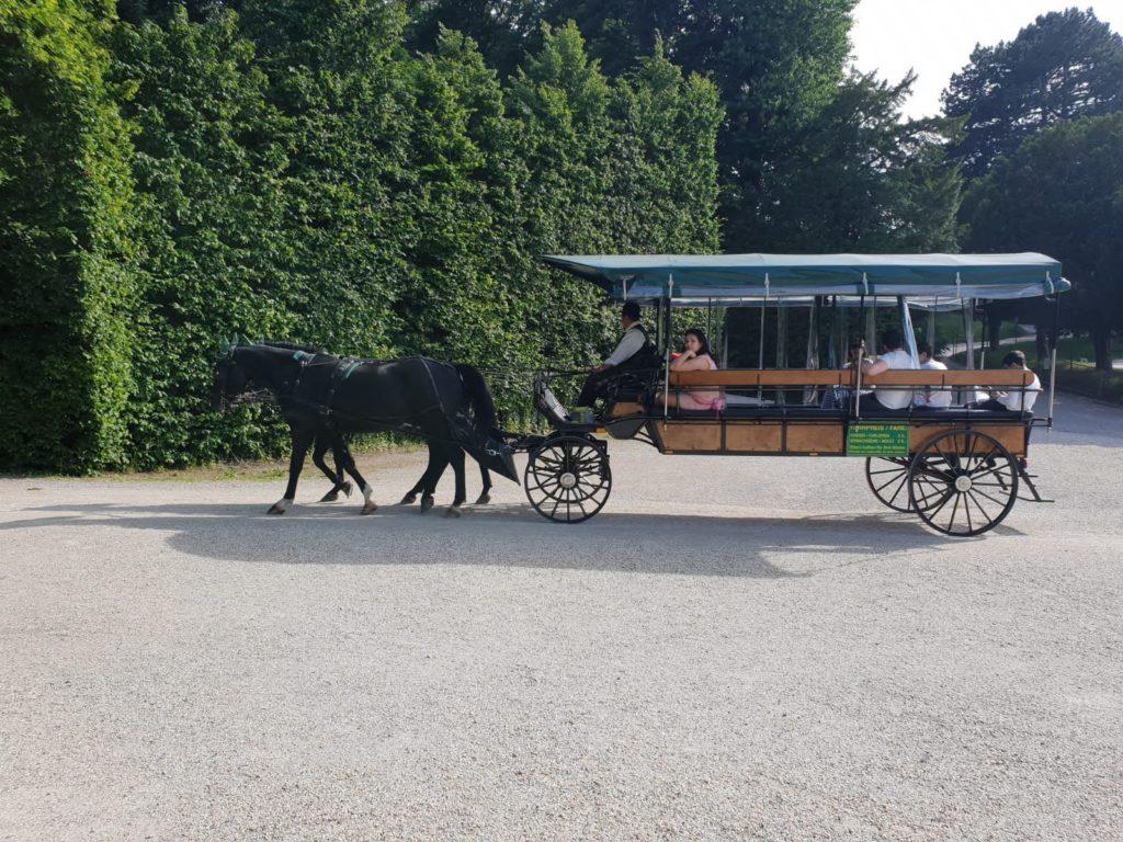 Eine Rundfahrt mit der Pferdekutsche durch den Schlosspark nahe dem Mauthaus Schönbrunn - Ferienappartement - Pop-Up Shop